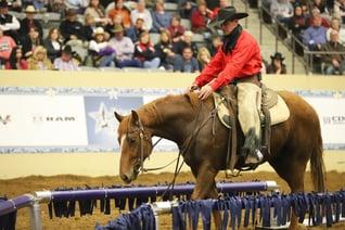 Quadrant Australia Horse Deals Horsemanship Tour to USA-WadeBlack2