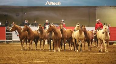 Quadrant Australia Horse Deals Horsemanship Tour to USA2 (1)